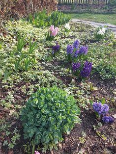 Wiosenna rabata w ogrodzie w stylu rustykalnym_ projekt Joanna Paszko Ochotny