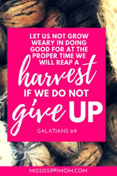 Have faith because there will be a harvest. God is always at w… Do not give up! Have faith because there will be a harvest. God is always at work! Christian Marriage, Christian Faith, Christian Living, Christian Women, Bible Verses For Women, Scripture Verses, Have Faith, Faith In God, Christian Encouragement