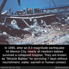 "In after an magnitude earthquake hit Mexico City, nearly all newborn babies survived a collapsed hospital. They are known as ""Miracle Babies"" for surviving 7 days without nourishment, water, warmth or human contact. Wow Facts, Wtf Fun Facts, True Facts, Random Facts, The More You Know, Good To Know, Creepy Facts, Creepy Things, Creepy Stuff"