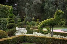 Lotusland in Montecito; a 37-acre botanic garden designed by Madame Ganna Walska who was a Polish opera singer, and apparently quite the green thumb! (Photo of the Topiary Garden)