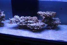 Minimalist Aquascaping - Page 66 - Reef Central Online Community Coral Reef Aquarium, Saltwater Aquarium Fish, Saltwater Tank, Marine Aquarium, Aquarium Shop, Aquarium Ideas, Marine Fish Tanks, Marine Tank, Nano Reef Tank