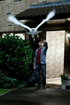 """Daniel radcliffe portrays harry potter with hedwig the owl in a scene from """"harry potter and the deathly hallows: part Harry James Potter, Harry Potter World, Magia Harry Potter, Mundo Harry Potter, Harry Potter Films, Harry Potter Universal, Daniel Radcliffe, Harry Potter Funny Pictures, Wallpaper Harry Potter"""