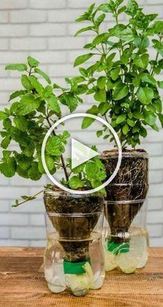 Vegetable Garden Tips, Veg Garden, Garden Trellis, Diy Garden Bed, Garden Crafts, Garden Projects, Hydroponic Gardening, Container Gardening, Recycled Garden