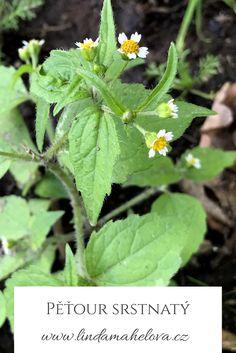 Herbalism, Herbs, Plants, Honey, Herbal Medicine, Herb, Plant, Planets, Medicinal Plants