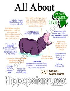 "My All About Hippopotamuses Book - African Animal Unit Study from Courtney McKerley on TeachersNotebook.com (9 pages)  - This ""All About Book"" will be a fun addition to your classroom and lesson on hippopotamuses. This packet can be used along with books specific to the animal or it can be used on its own. Other animals you will see in the African series include Elephant, G"