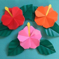 Ezt a színes szirmokkal és virágpáhokkal Pyun jellemzi. Mi a helyzet a gyerekekkel való megmunkálás és a déli országokban való ápolással?