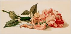Cabbage Rose. Sitting next to the Rose is a Fairy Baby writing a love note on one of the Rose Petals. -