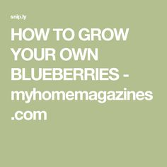 HOW TO GROW YOUR OWN BLUEBERRIES - myhomemagazines.com