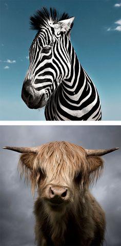 Noble Animals: Photography by David Boni   Inspiration Grid   Design Inspiration