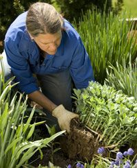 Dividing Perennials: Gardener's Supply  includes a list of perennials and when and when not to divide