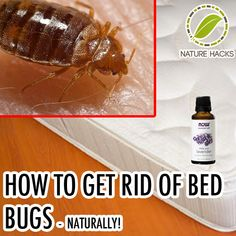 how to get rid of bed bugs - Non-permeable mattress and pillow covers - heat - lavender!