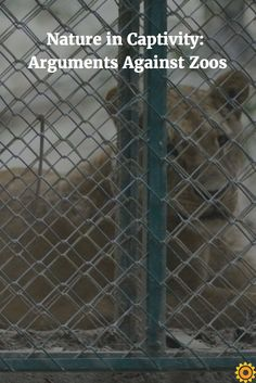 In part 1 of 2, we take a look at the arguments against zoos.