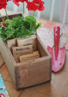 seed box with red geraniums