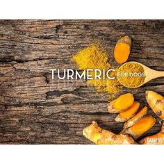 Turmeric is all the rage for us hoomans, but do you know it can also be great for your dog? Follow the link in our bio to read our latest blog on the topic. #turmeric #curcumin #healthlives #happypets #dogs #naturalpetfood