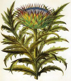 Artichoke Thistle by Besler, Basilius. Needlepoint. Everyone who needle points needs to know about this shop with thousands of canvases in all levels of expertise. What. A. Find.
