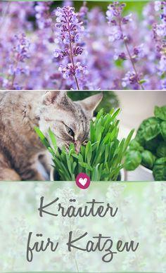 Wie man einen kleinen Kräutergarten für Katzen anlegt - auch ohne grünen Daumen.