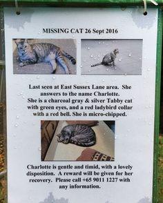 Saw this notice of missing cat, please help!!  www.facebook.com/slothstudio