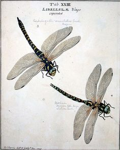 Moses Harris: An exposition of English insects ... minutely described, arranged, and named, according to the Linnaean system London: 1782 Sp Coll q512 Univ. of Glas.