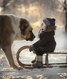 Elena Shumilova's magical, wintry photography: Sled and dog