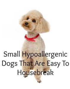 Dog Breeds That Are Easy To Housebreak