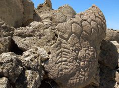 This May 2012 photo provided by the U.S. Geological Survey shows ancient carvings on limestone boulders in northern Nevada's high desert near Pyramid Lake. The carvings have been confirmed to be the oldest recorded petroglyphs in North America - at least 10,500 years old. The findings were published August 2013 in the Journal of Archaeological Science. This site was once the shoreline of the now dried up Winnemucca Lake. (AP Photo/USGS, Larry Benson)