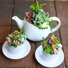 Charming Succulent Indoor Garden Ideas 2019 – Page 59 of 64 – SooPush – Garden Design