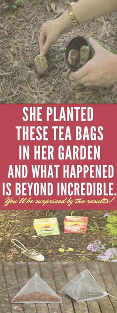 She Planted Some Tea Bags In Her Garden, And What Happened Next Is Beyond Incredible. Soil Layers, Tired Eyes, Natural Health Tips, Cooking Recipes, Healthy Recipes, Easy Recipes, Wellness Fitness, Health Fitness, Fitness Diet