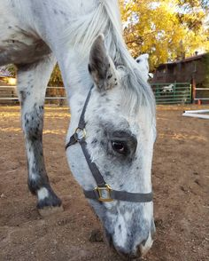 Because who doesn't love a cute little Appy.