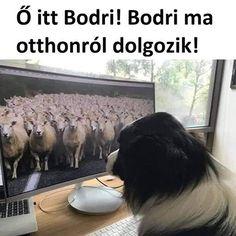 Hole-Digging Doggo Memes Dog Memes) - I Can Has Cheezburger? Funny Memes Tumblr, Funny Animal Memes, Love Memes, Cat Memes, Funny Animals, Animal Humor, Girl Memes, Funny Sports Pictures, Funny Photos