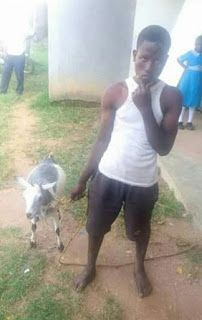 A young Kenyan man has sparked outrage after he was caught having sex with a goat. He was paraded publicly with the goat. News Around The World, Around The Worlds, Goats, Latest Trends, Photos, Pictures, Goat