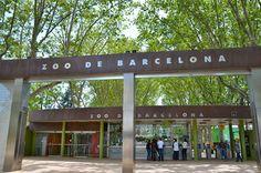 Barcelona Zoo is een bekend bezienswaardigheid in Barcalona omdat daar een bijzondere albino gorilla zat hij heette Snowflake maar is helaas gestorven.