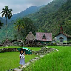 RICE TERRACES - PHILIPPINES
