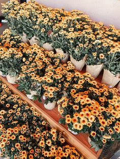 5 Ways to Brighten Up Your Week May Flowers, Wild Flowers, Beautiful Flowers, Exotic Flowers, Summer Flowers, Purple Flowers, No Rain, Flower Aesthetic, Summer Aesthetic