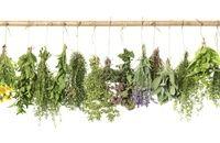 Kosmetyki ziołowe, czyli zioła dla urody. Ekstrakty ziołowe używane w kosmetyce