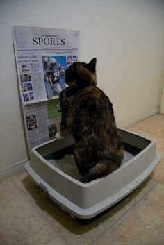 Funny Cat Pictures - Cat Reading The Sports Funny Animal Pictures, Funny Animals, Cute Animals, Random Pictures, Animal Pics, Animal Memes, Cute Cat Gif, Funny Cute, Cat Fun