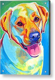 Labrador Retriever Acrylic Prints - Lab - May Acrylic Print by Alicia VanNoy Call