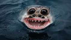 Top 10 Most Terrifying Animals - Published on Apr 1, 2015 Damn nature, you scary! There are some terrifying animals and sea creatures out there that look so alien that they can't be from this planet. See 10 of the most terrifying animals in the world!