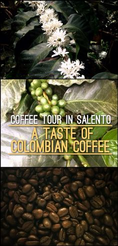 Are you planning to do a Coffee Tour in Colombia? Salento is a great place to do it. Here are the details of our coffee tour at Finca de las Brisas (Cafe Don Elias), an family owned organic coffee farm.