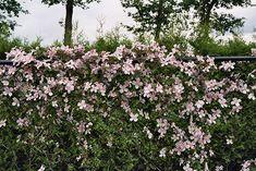 Composition habillant un mur - un jardin qui vous ressemble