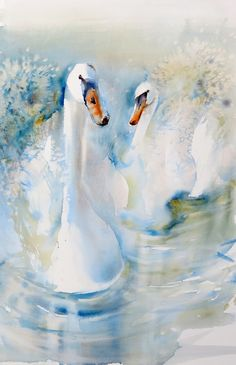 Watercolour Swans ~Kaye Parmenter