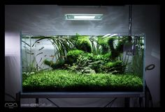 Green Aqua Showroom | current shots from our gallery including the latest event tanks from re-Scape