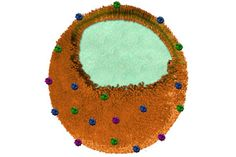 Cross section of nanosponge that may be able to protect against infections and venoms.