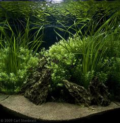 a ton of photos for getting aquascaping ideas.