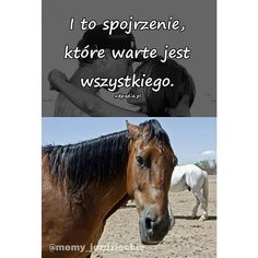 Equestrian Memes, Read News, Horse Riding, My Passion, Life Lessons, Polish, Horses, Humor, Animals