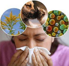 Herbal #Remedies For Allergies: List of Natural Antihistamines   #allergies