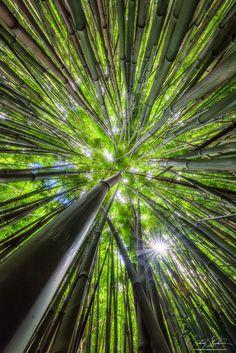 Bamboom by AndrewShoemaker on DeviantArt