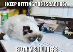 Best Grumpy Cat Memes - Bing images