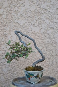 Bonsai Art, Bonsai Plants, Bonsai Garden, Garden Plants, Terraria Tips, Minis, Mame Bonsai, Miniature Trees, Old Trees