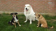 Chanel, Dgena et Bella