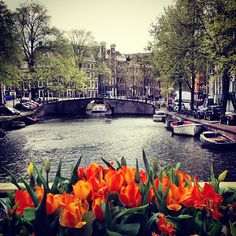 Amsterdam, Netherlands -- http://Expatica.com -- News and information for the international community